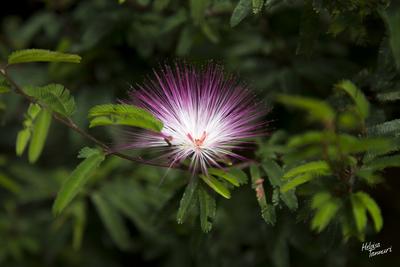 Flor de Luz1