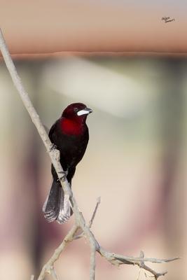 Tranquilidade do Pantanal