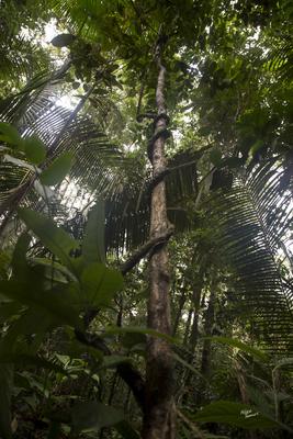Floresta Fechada