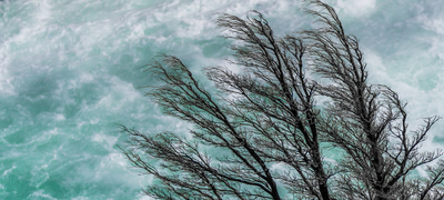 Tree, river and wind
