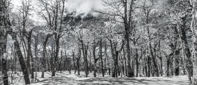 Bosque Nevado InfraRed