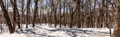 Bosque Nevado Color