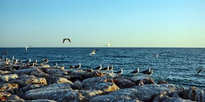 Gaivotas no Algarve