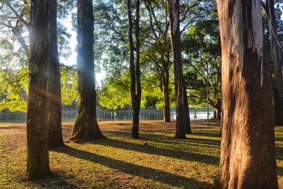 Natureza no Parque Ibirapuera
