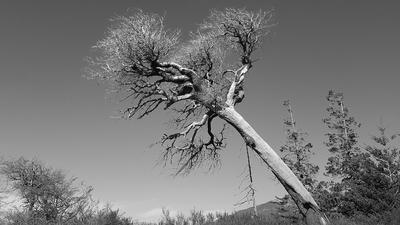 Natureza e sua força