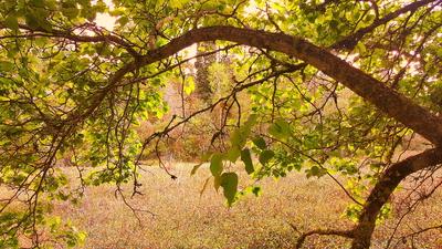 Entre folhas