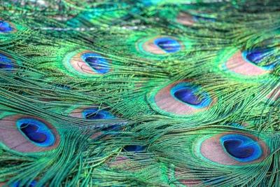 Voando nas cores