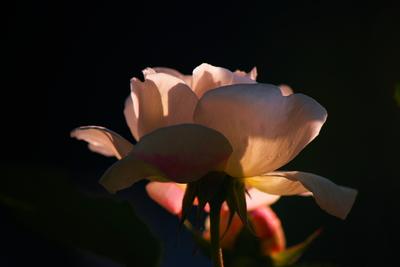 Luz da flor