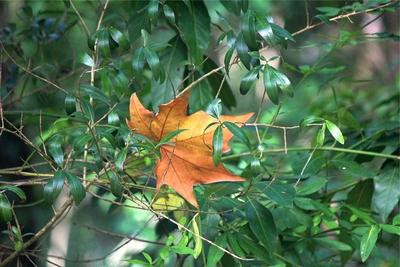 Contraste do outono