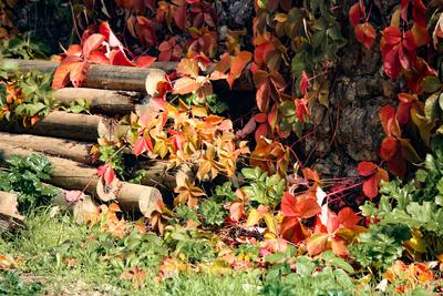 Outono vermelho