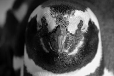 Penguin's portrait