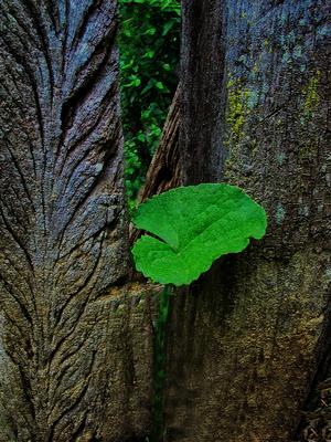 Natureza mínima