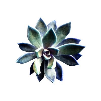 Floral Cor 003 Lourdes Valle