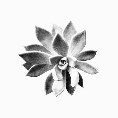 Floral PB 003 Lourdes Valle