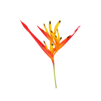OQ Floral COR 004 LV