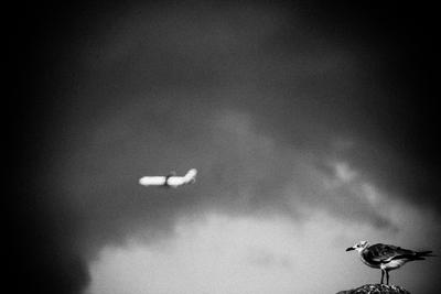 O pássaro e o avião - Sonhar é preciso