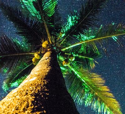 Coqueiro e Céu da Bahia - Como os Baianos veem o céu