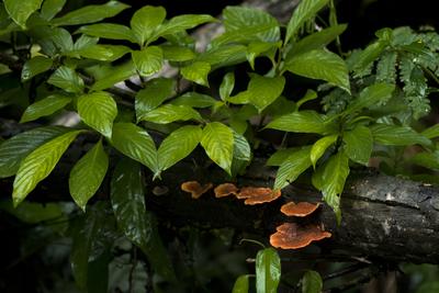 Tronco, folhas e fungos